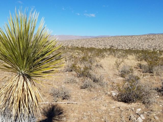 NM Desert