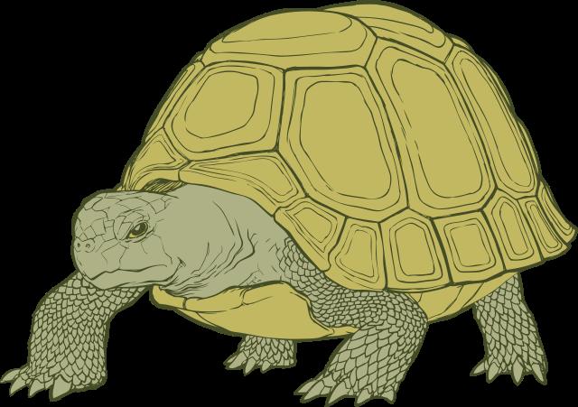 Time Tortoise